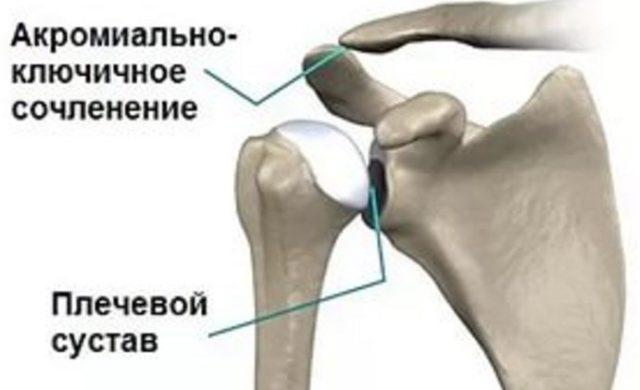 Строение человеческого плечевого сустава является самым сложным из всех суставов в организме, так как амплитуда движения руки чрезвычайно широка