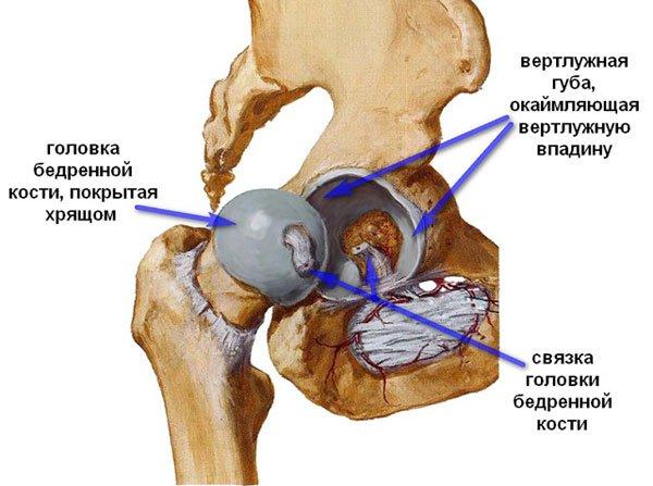 На долю артроза тазобедренного сустава (коксартроза) приходится около трети всех жалоб, а это десятки и сотни пациентов в год