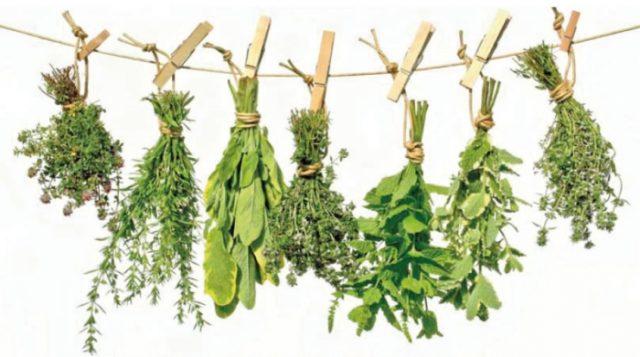 При подагре для лечения заболевания применяют травяные отвары